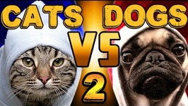 Cats VS Dogs - The Ultimate Showdown 2