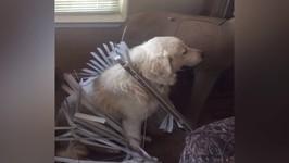 Cute Dog Gets Stuck