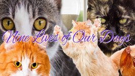 Nine Lives of Our Days - Cat Soap Opera