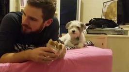 Dog Secretly Wants A Bite