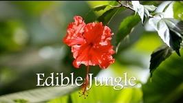 Edible Jungle In Panama