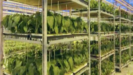 Greenhouse Growing Integrated Pest Management Starts Early