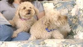 Good Dog Series 2, 2GD216- Dog Handling Tips