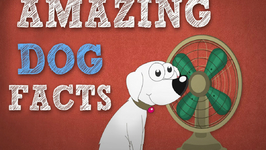 Amazing Dog Facts - OMG Facts About Animals