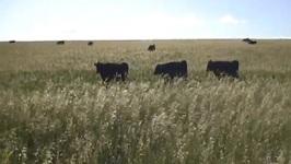 Tony's 100 Grass-Fed Beef