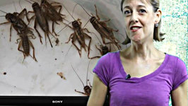 America's Next Protein Source - BUGS
