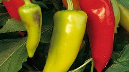 Seasons - Hungarian Hot Peppers
