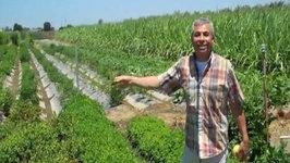 Beyond Bok Choy Farms