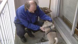 Good Dog Series 2, 2GD203 - Tips On Giving Pills To A Dog
