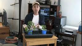 How to Transplant Tomato Seedlings