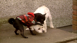 Good Dog Series 2, 2GD204- Handling Leash Techniques