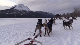 Dog Sledding at 10 Mile Southern Lakes in the Yukon, Canada - VLOG