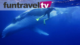 We Go Swimming With Humpback Whales In Ha'apai - Tonga Part 2