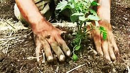 Gardening Tips - Planting Your Plants - The Vegan Zombie