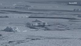 Major Cities Could be Underwater 'In Our Lifetimes' Because of Melting Ice Shelf