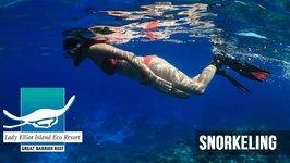 Snorkelling On Lady Elliot Island, Southern Great Barrier Reef, Queensland, Australia