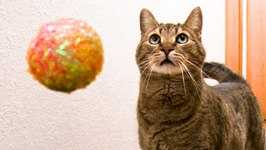 MEAN KITTY and THE WORLD'S FASTEST BALL