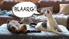 WEIRD CAT MEOW