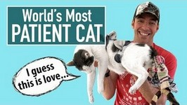World's Most Patient Cat