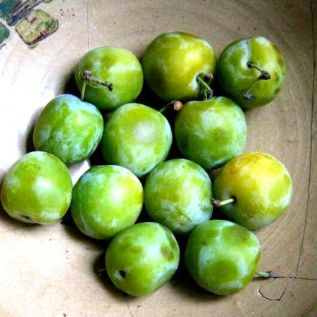 Harvested Greengages