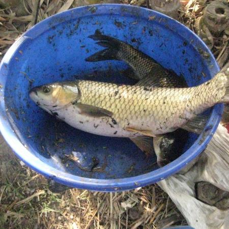 Bucket Containing Fish