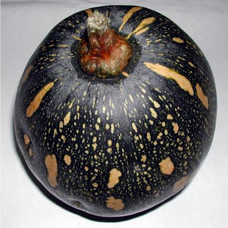 Cucurbita fruit