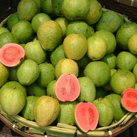 Indonesian Guava