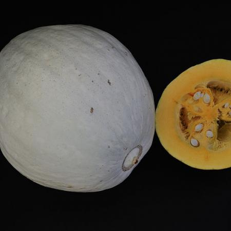 Hopi Pale Grey Squash