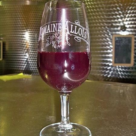 vin en fin de fermentation