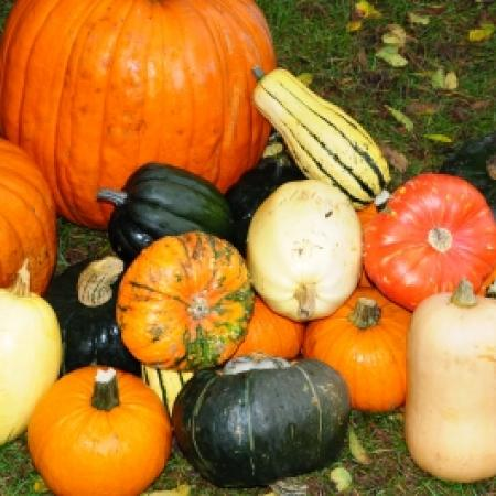 Types of Gourd