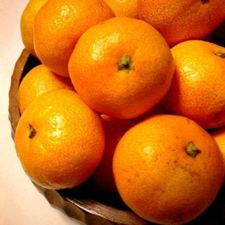 Citrus Unshiu (Oranges)