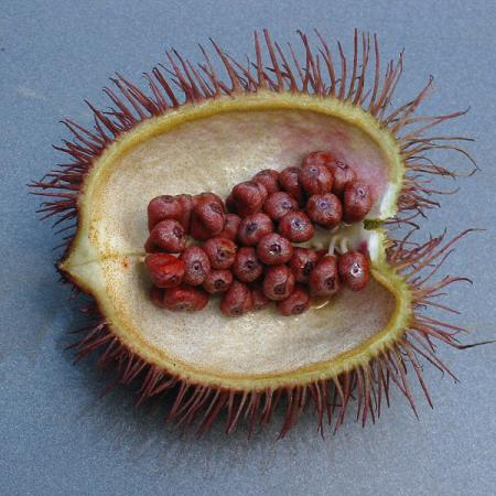 Bixa Orellana Seeds