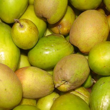 Shahi Bair (Indian Plum)
