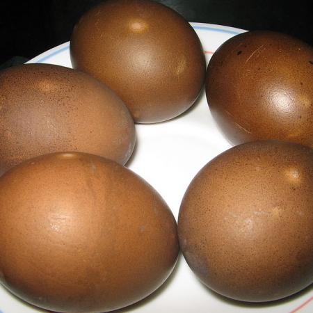 Yosri Telur Pidang