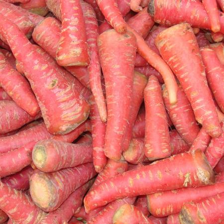 Gajar ( Carrot )