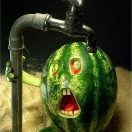 Bathing Water Melon