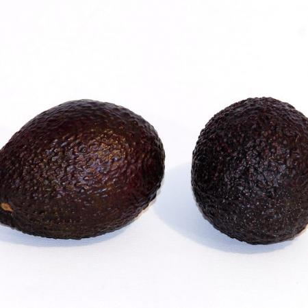 Black Avocados