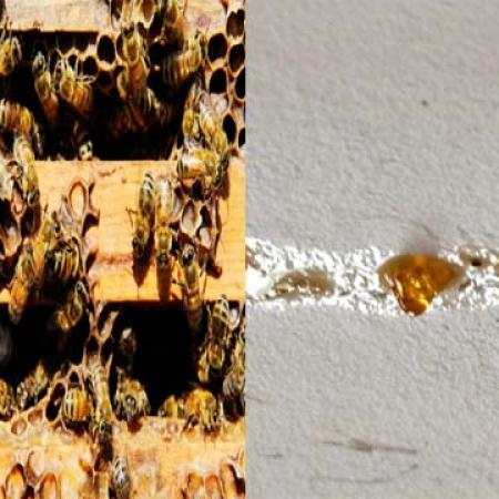 House of Honey - Where Honey Drips from the Ceiling