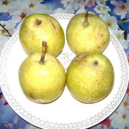 Naspati_Fruit