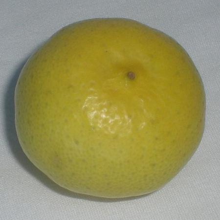 Ripekey Lime