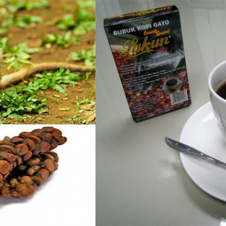 Coffee Made of Cat Poop