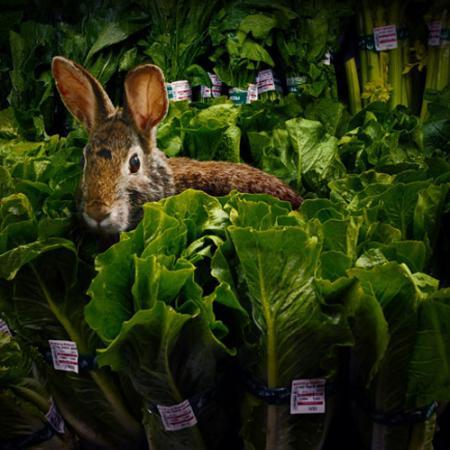 Wild Rabbit Chase