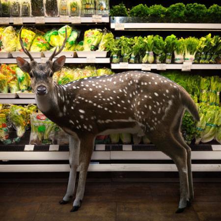 The Deer Looks Smitten