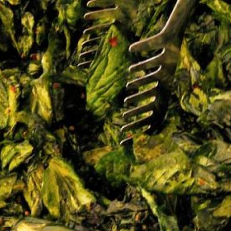 Dark-green leafy vegetables